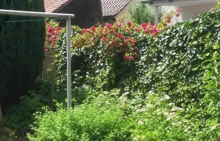 Einfamilienhaus kaufen Bad Buchau Altbau mit kleinem Garten